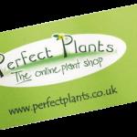FS-4526-CLASSIC-Kniekissen-(Perfect-Plants)